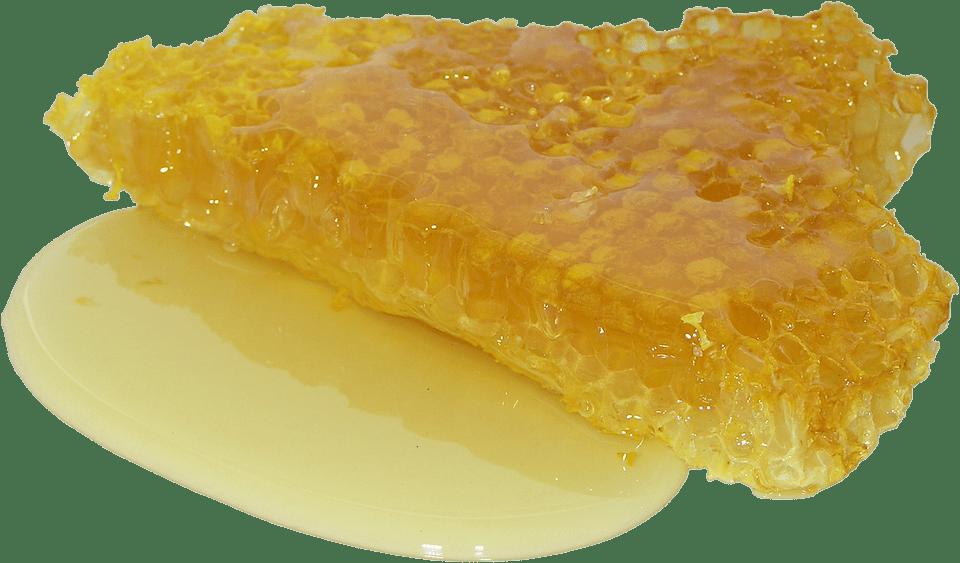 Javasolt méhpempő forgalmazók